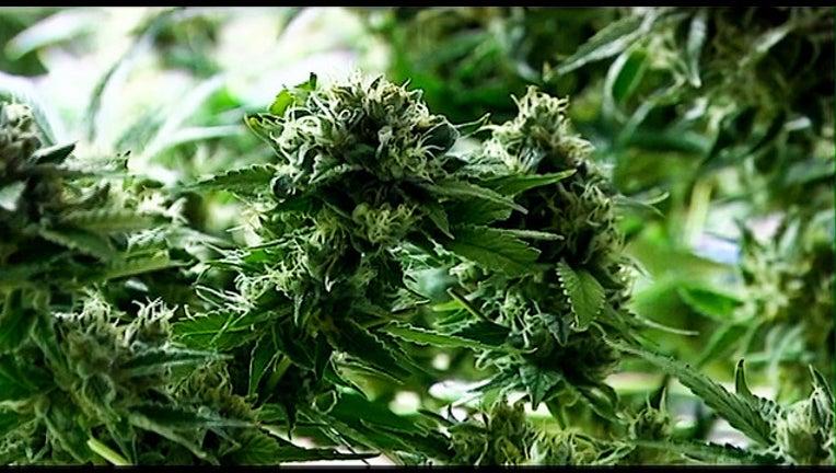 FOX - KRIV - marijuana_1550774875453.jpg.jpg