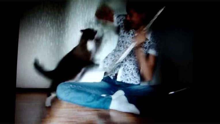 6816406f-Black Cat Frightens Girl-402970