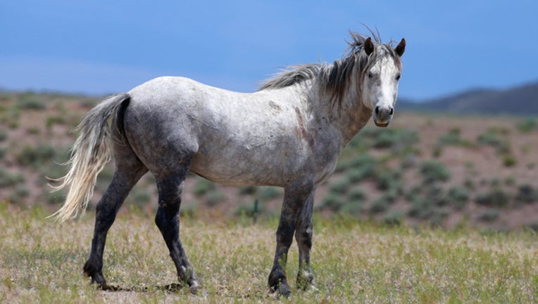 71184aeb-GETTY Wild Horse-401096