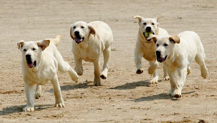 f18dab05-GETTY DOGS 052719-407693