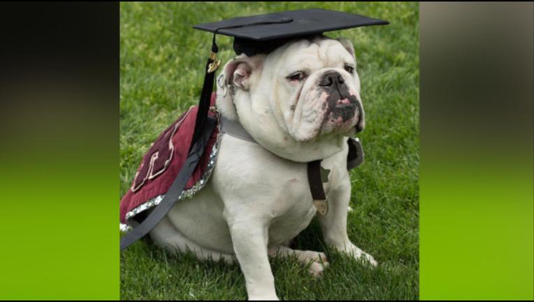 5f68e61e-University of Redlands dog_1510687086373-407068.PNG