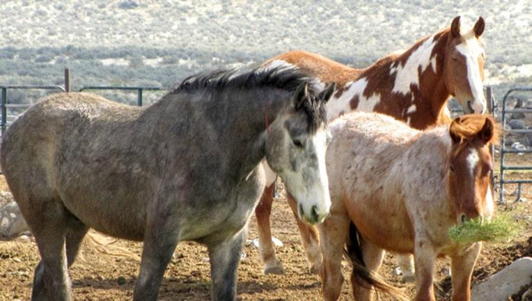 8025d8ff-Wild horses image from Bureau of Land Management-404023
