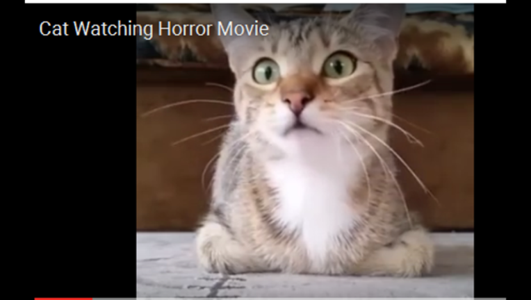 e47fce08-cat watching horror movie_1463147802184.PNG