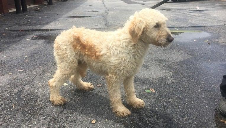 39c7b44e-connie_parkesburg_puppy_mill_rescue_080618_1533573203142-401096.jpg