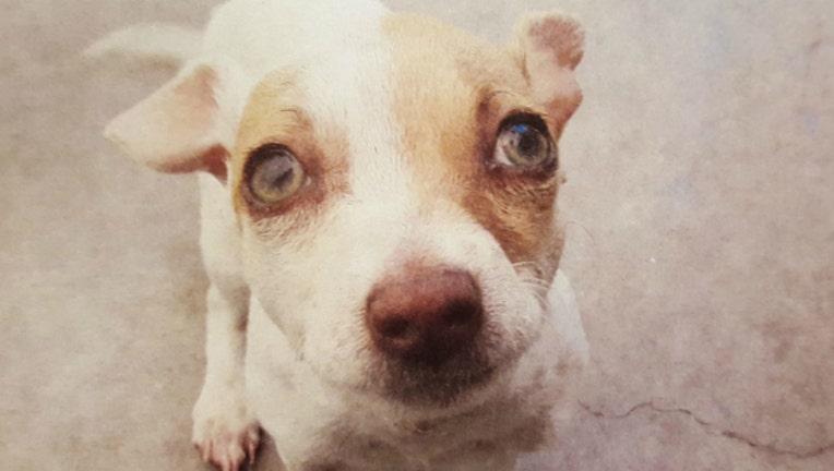 fe86f979-dog-heroin_1464048339745-404023.jpg