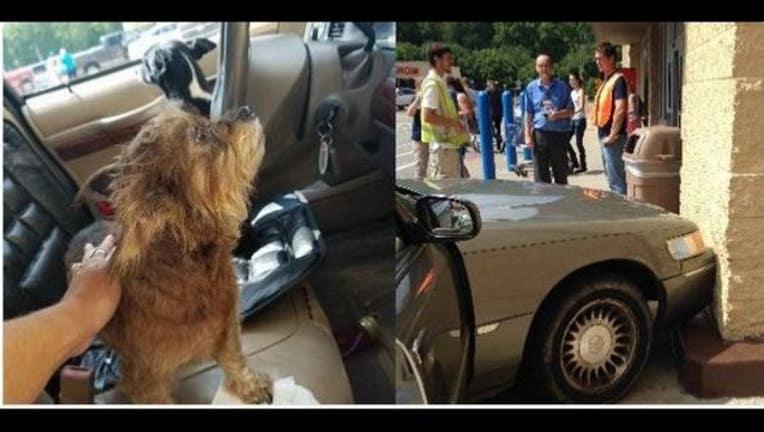 75896132-dogscar1_1470195304778-407068.JPG