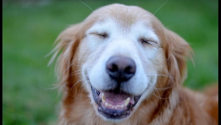 bb0d73c5-happy-dog _OP_1_CP__1448059854623_517105_ver1.0_1448072001618.jpg