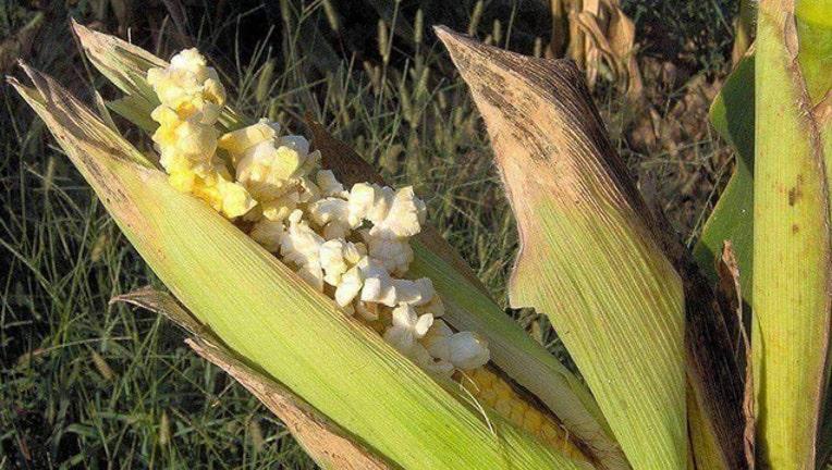 d342a628-popcorn cropped_1563643894804.jpg-401720.jpg
