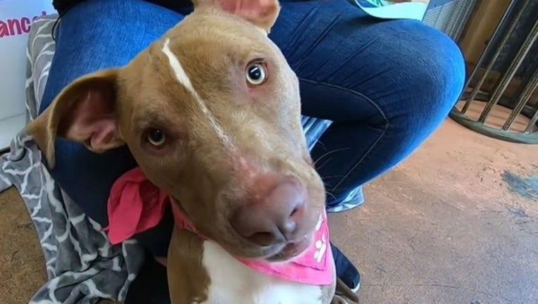 fe3b3bed-rescue dog_1556594662867.JPG.jpg
