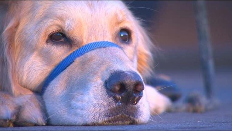 66e14707-service dog for vet_1478839947552-409162-409162.JPG