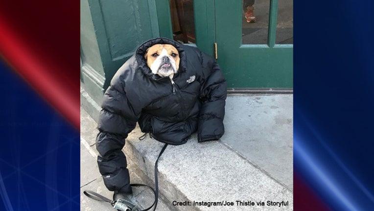 8ab8bd03-storyful dog_1515014841380.jpg.jpg