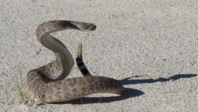 2d12d6cd-western-diamondback-rattlesnake-1929358_1920_1495034563659-401385.jpg