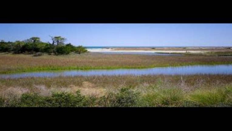 34adaed6-wetlands_1488733829951.jpg