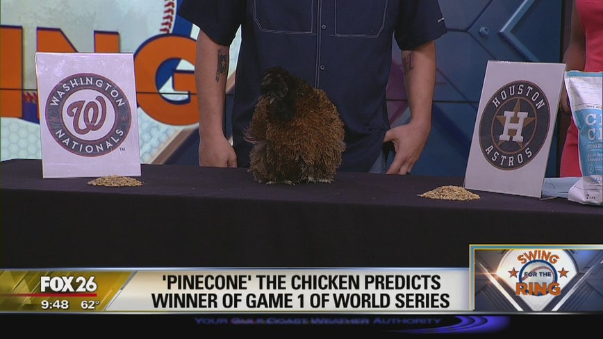 'Pinecone' the chicken predicts winner of Game 1 of the World Series