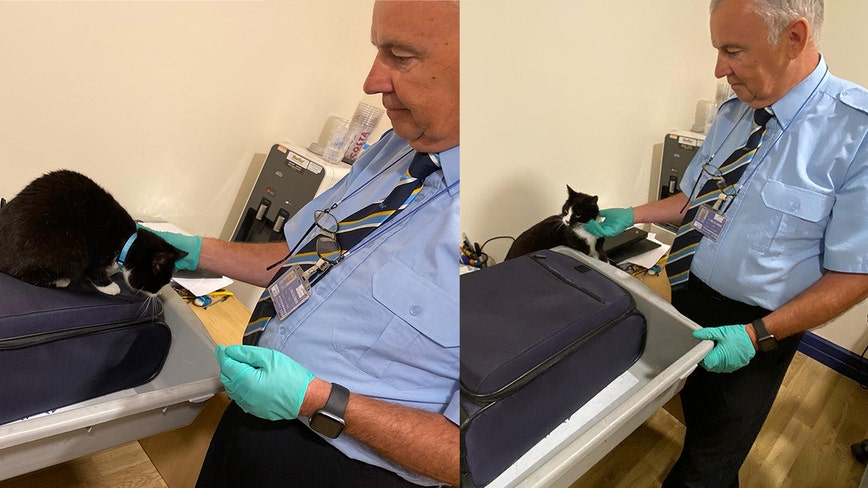 The cat's out of the bag: Airport security stops couple after pet cat sneaks into carry-on luggage