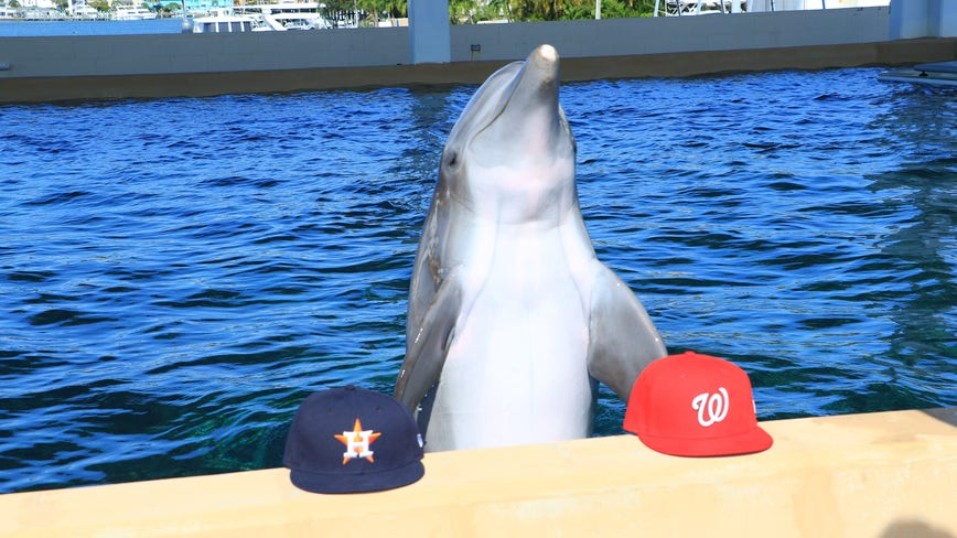 Nicholas the Dolphin predicts the World Series winning team