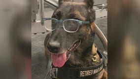 Veteran bomb dogs returning home to Texas for retirement