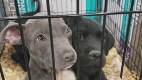 More than 1,000 animals from area shelters ready to adopt at Mega Adoption event