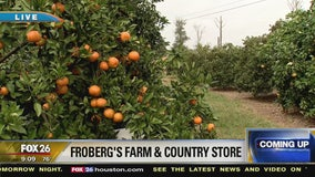 A morning at the Froberg Farm in Alvin
