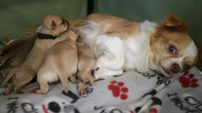 'They are her puppies now': Orphaned puppies adopted by dog 5 days after she lost her own litter