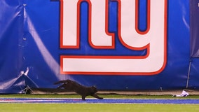 Black cat halts Giants-Cowboys Monday Night Football game, leaving viewers transfixed