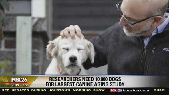 Dog aging project looks to increase research on the aging of our four-legged friends