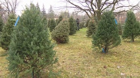 At-risk youth run Christmas tree lot, coffee shop to learn job skills