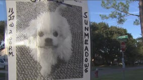 Man offering $4,000 reward for lost puppy that is a clone of his beloved dog