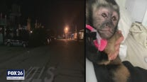 Galveston police find missing monkey