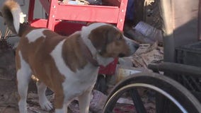 Dogs in need after owner dies leaving them alone on property