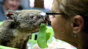 Australian wildfires: Here's how to help those in need as flames engulf wildlife, homes