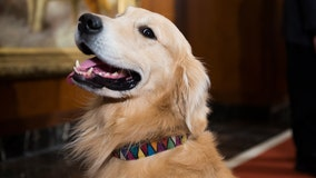 Spotify will create the 'pawfect' playlist for you to enjoy with your pet