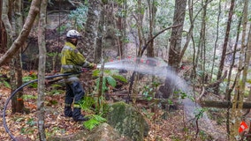 Australia firefighters save world's only rare dinosaur trees