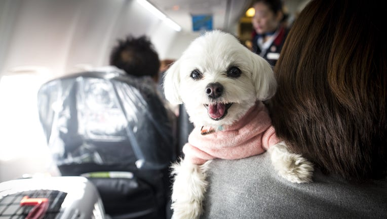 Emotional support animals and their owners allowed to sit together on flight