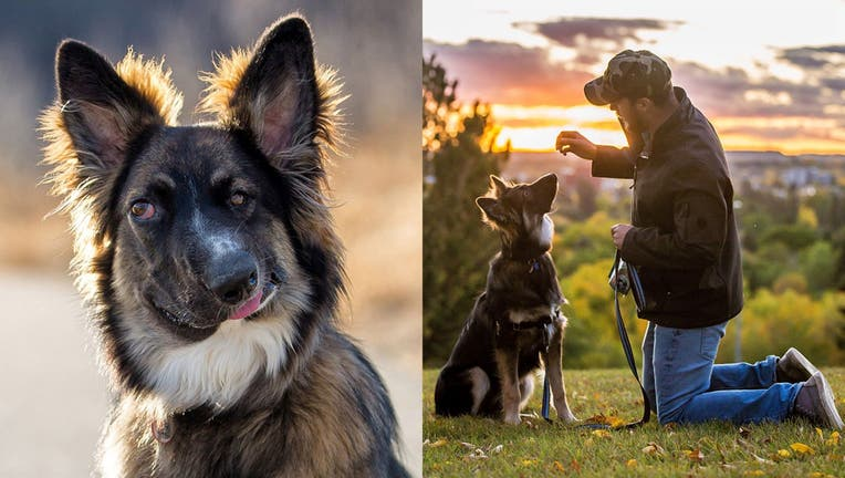 """Brodie the German Shepherd Border Collie was left with a """"wonky"""" face and partial blindness after being attacked after birth."""