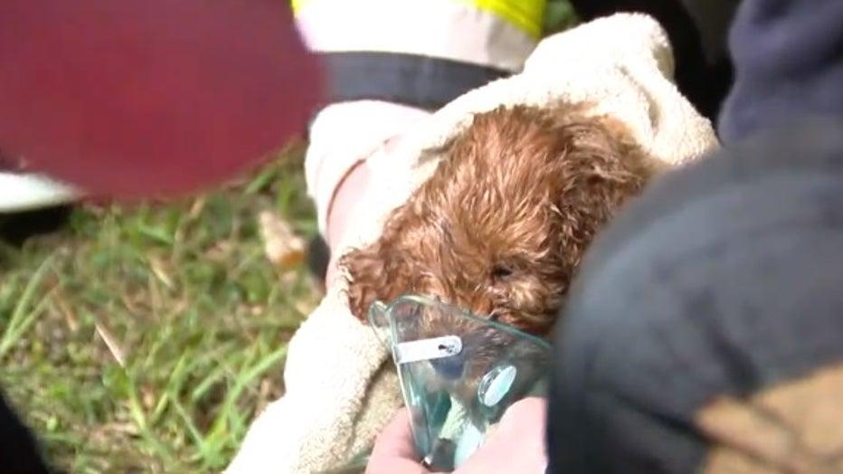 dogs-rescuee.jpg