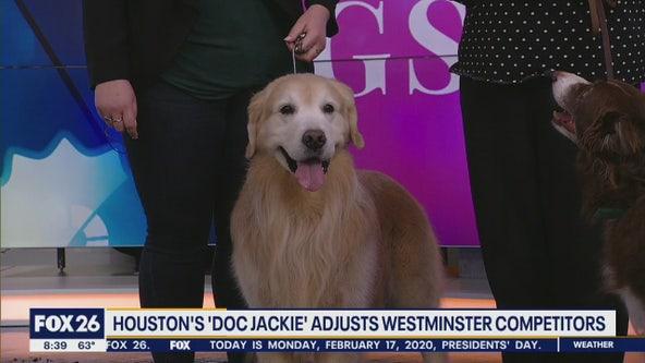 Canine Chiropractor
