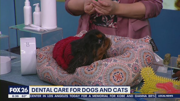 Dental care for dogs and cats