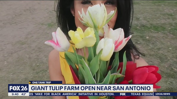 One Tank Trip: Giant tulip farm & vineyard