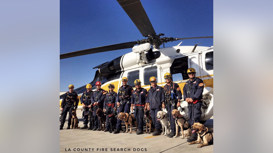 LACOFD-Search-Dogs_1.png