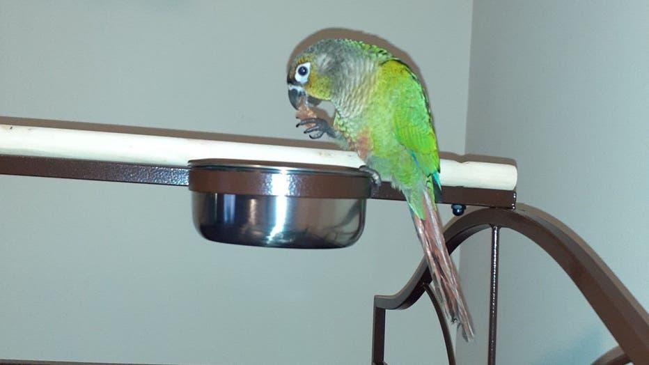 parrot-yells-fire.jpg