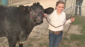 Bayou City Buzz: Rodeo families come together so kids can still show animals