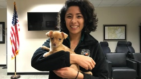 Houston SPCA provides 'puppy stress relief' to city officials and emergency responders