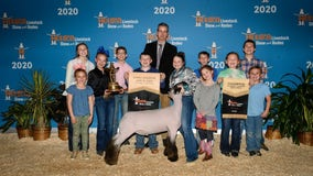 Houston Livestock Show and Rodeo hosts online auctions to support junior exhibitors
