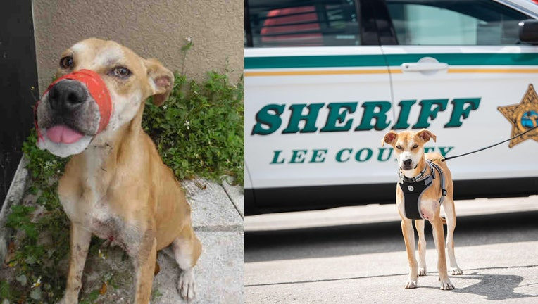 lee county sheriff chance dog mouth taped shut
