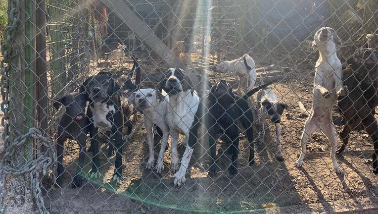 suwannee dog rescue 2