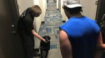 Man arrested after caught beating elderly dog on surveillance video