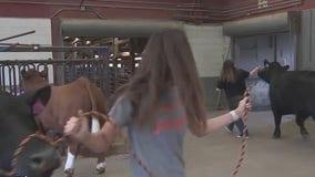 Galveston County Fair helps kids sell their animals