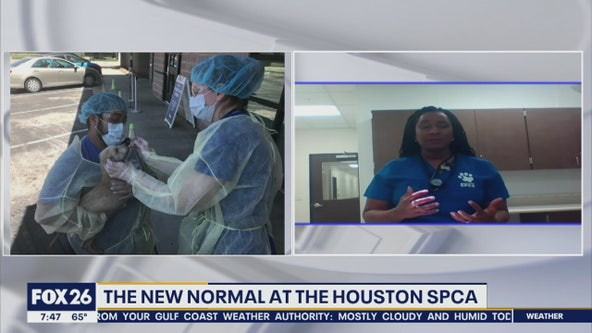 The new normal at the Houston SPCA