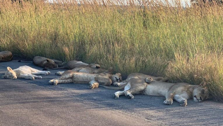 Lions-KNP-1